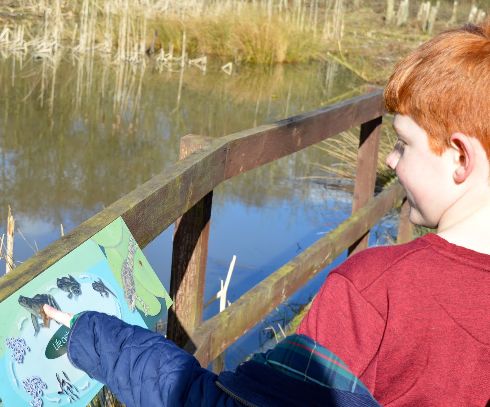 WWT Washington Wetland Centre | An Accessible North East Day Out for the Whole Family - life cycles sign