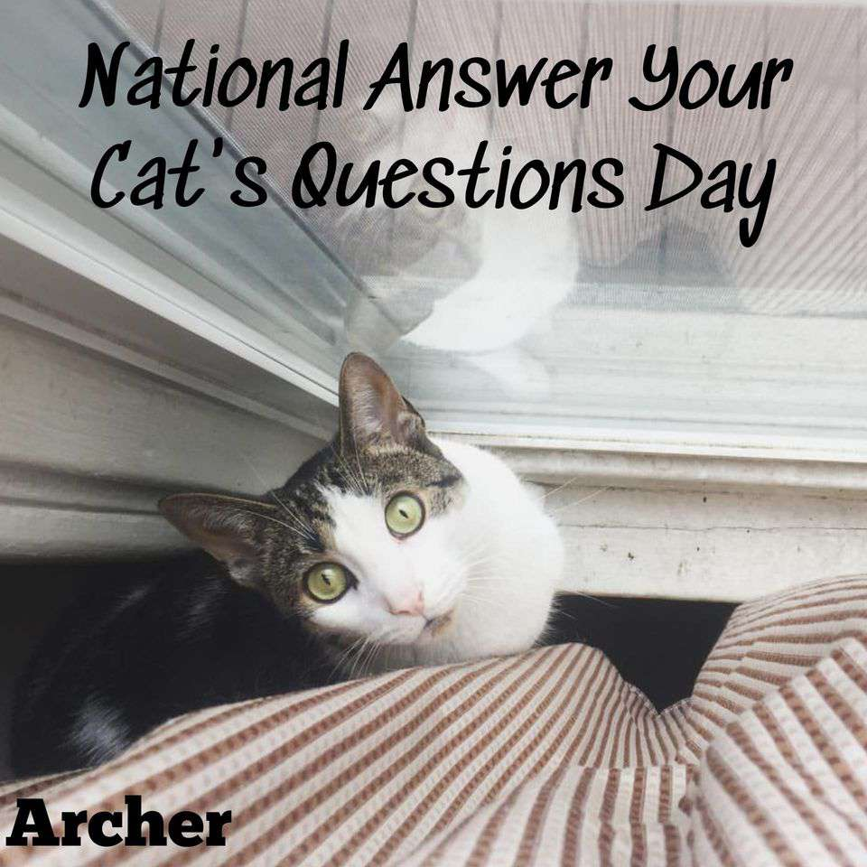 National Answer Your Cat's Questions Day Wishes Photos