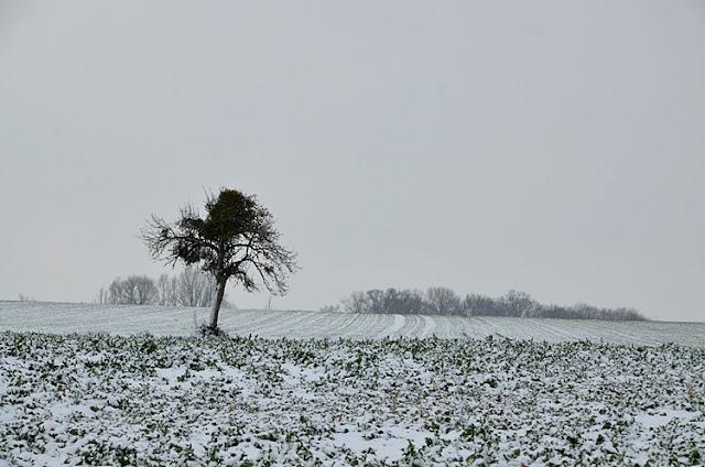 Paysage de campagne sous la neige Puisaye