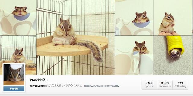 ünlü hayvan instagramları