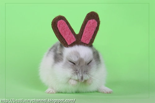 I'm a bunny give me a carrot.