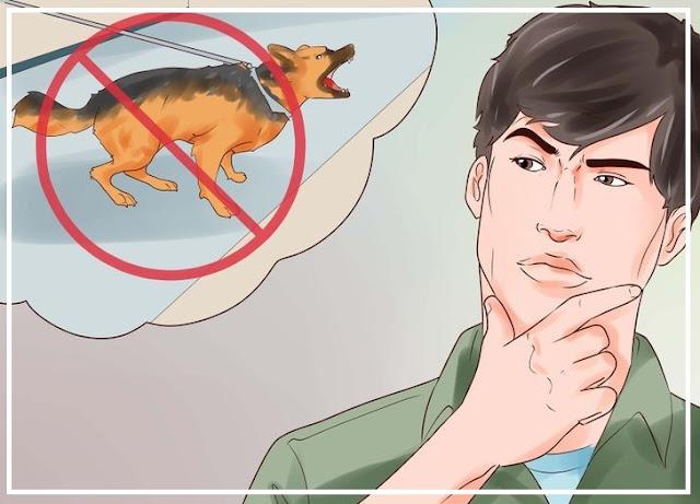 Berdepan detik cemas dikejar anjing, ini cara yang patut anda lakukan untuk selamatkan diri