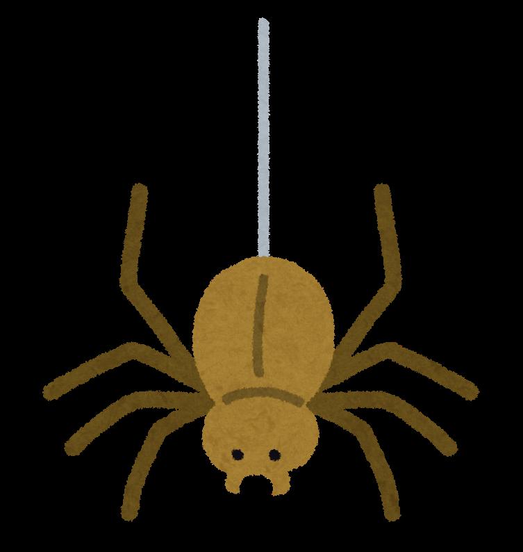Spider Videos For Kids
