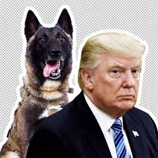 American Presidents love for dogs infographics