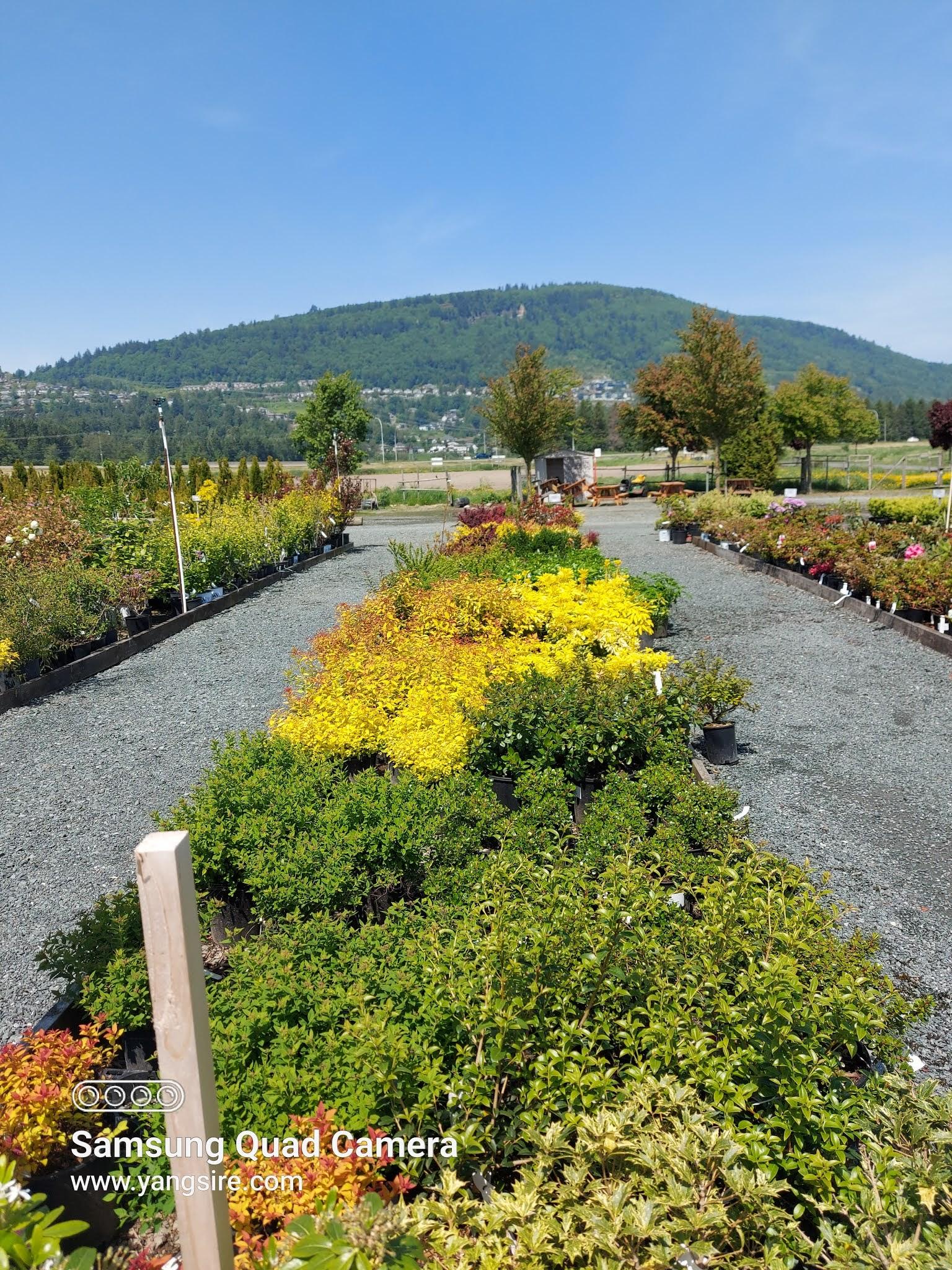 Five maples nursery and garden centre