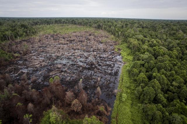 RAN Beberkan Perusahaan Multinasional dan Bank Besar Memicu Kerusakan Hutan di Indonesia