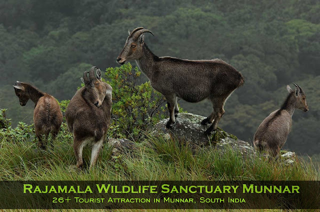 Munnar Attractions : Rajamala Wildlife Sanctuary Munnar