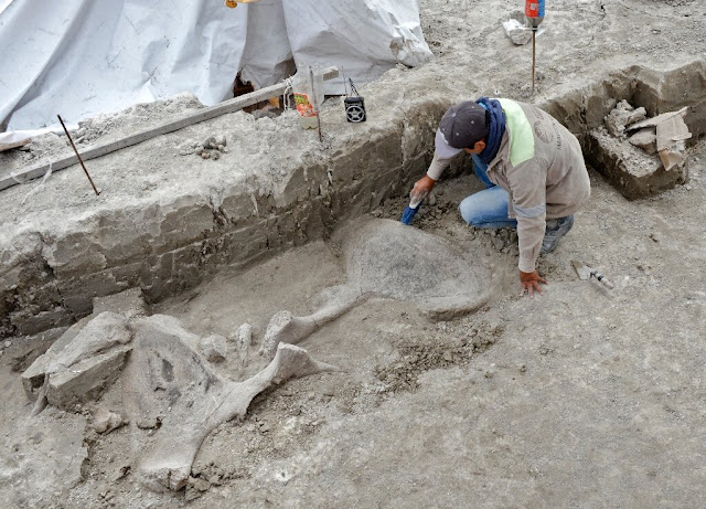 Mammoth skeletons and 15,000-year-old human-built traps found in Mexico