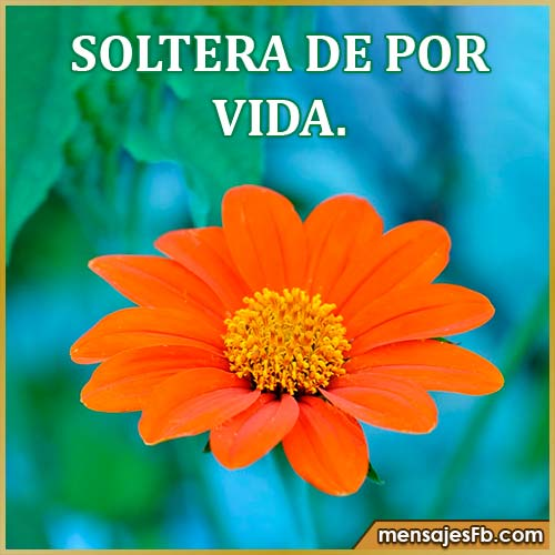 mujeres solteras frases