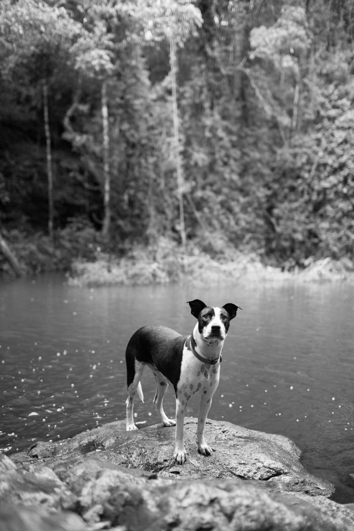 black and white joop