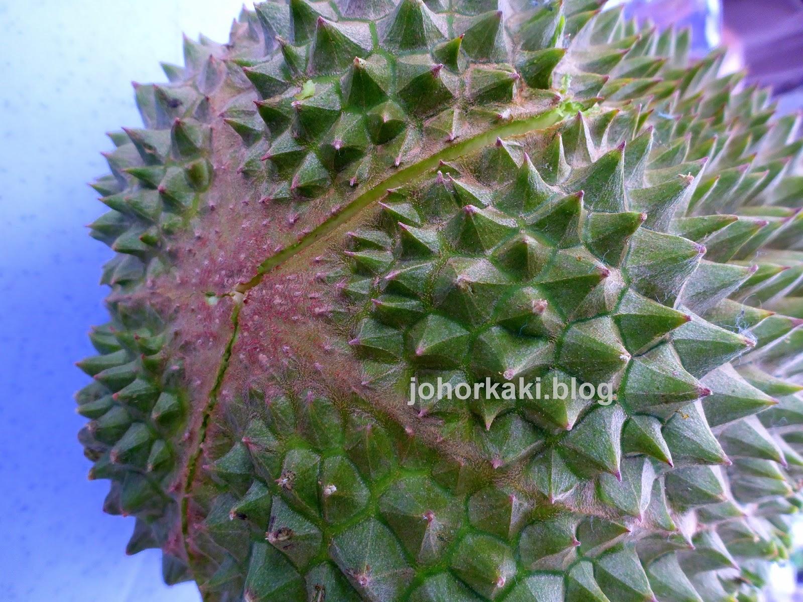durian hunting in johor bahru malaysia jk1702 johor kaki travels for food. Black Bedroom Furniture Sets. Home Design Ideas