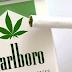 Marlboro Habría Iniciado Negociaciones En México, Para La Venta De Cigarrillos De Marihuana.