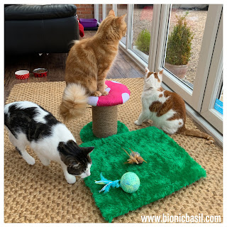 What's In The Box ©BionicBasil® Gus & Bella Spring Kitten Box Melvyn Amber and Fudge