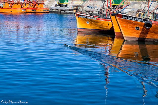 Pto.de Mar del plata un ave nadando veloz  entre barcos anclados