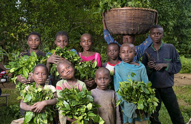 Kids collecting vegetables, Yangambi, Democratic Republic of Congo