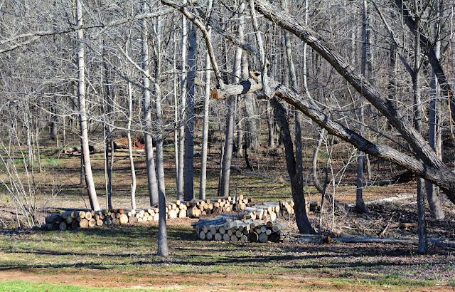 Southern Meadows Blog