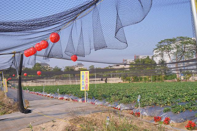 DSC00857 - 台中觀光果園│採草莓不用去大湖,台中草莓世界就在潭子慈濟醫院對面開採囉