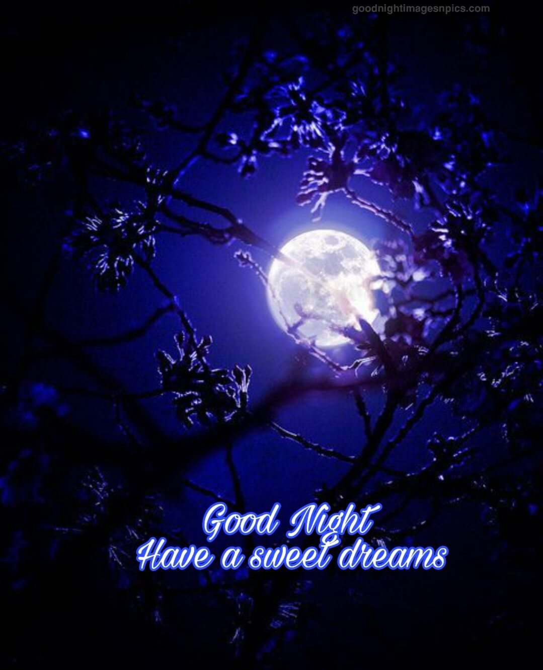 Good Night Photos And Quotes