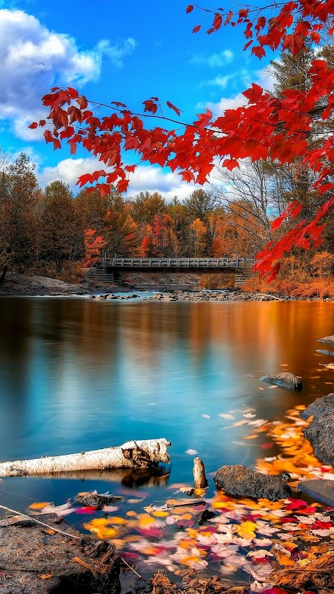 Con sông nhỏ vào mùa thu