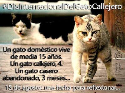 Sía Internacional Gato Callejero Gatera ConGatos