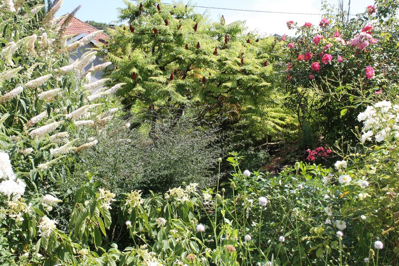 Doubs jardin a la mi aout un jardin fleuri et color for Jardin fleuri lyon 9
