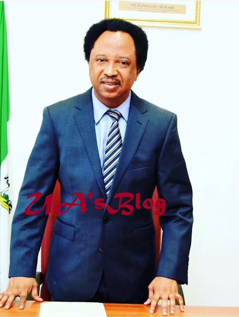 BREAKING: Sani loses at Election Tribunal