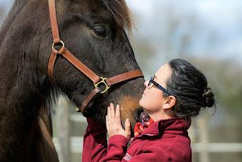 séance photo équestre cheval photographe pau pyrénées atlantiques