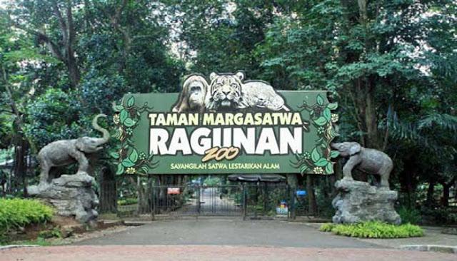 Kangen Ke Kebun Binatang Ragunan? Ikut Wisata Virtual Aja!