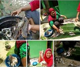 Ikan hasil pencemaran limbah pabrik LABURA