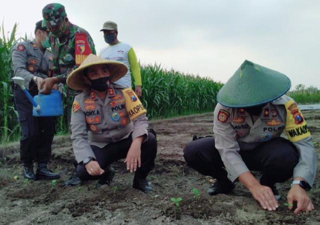 "Mojokerto-Sebuah desa di Kabupaten Mojokertomenerapkan ketahanan pangan secara mandiri untuk menghadapi wabah virus Corona. Selain lumbung pangan, desa ini juga mempunyai sejumlah kebun sayur dan peternakan itik.  Kampung yang menerapkan ketahanan pangan yaitu Dusun Jangkang, Desa Pohkecik, Kecamatan Dlanggu. Berbeda dengan kebanyakan kampung tangguh Semeru lainnya, desa ini mampu menghasilkan pangan sendiri. Mereka dibantu Bhabinkamtibmas dari Polres Mojokerto dan Babinsa dari Kodim 0815.  Selain lumbung pangan, Dusun Jangkang juga mempunyai beberapa kebun hortikultura. Seperti kebun cabai dan terong yang dikelola bersama-sama oleh warga setempat. Juga terdapat sebuah peternakan itik yang telurnya dikonsumi oleh warga.  Dengan begitu, penduduk Dusun Jangkang yang mengalami kesulitan ekonomi akibat wabah virus Corona, tetap bisa memenuhi kebutuhan dasar mereka. Karena bahan makanan sudah tersedia di kampung ini.  ""Di kebun hortikultura dan peternakan bebek masyarakat bisa mengambil secukupnya untuk kebutuhan sehari-hari. Tentunya diawasi oleh Bhabinkamtibmas dan Babinsa,"" ujar KapolresMojokertoAKBP Dony Alexander saat meninjau kampung tangguh Dusun Jangkang, Senin (29/6/2020).  Dony juga mengecek protokol kesehatan yang diterapkan di kampung ini. Sebagai salah satu kampung tangguh Semeru di Kabupaten Mojokerto, Jangkang rupanya sudah menerapkan protokol kesehatan untuk mencegah penyebaran virus Corona.  Penduduknya terlihat disiplin memakai masker, rajin mencuci tangan dan menjaga jarak satu sama lain. Di pintu masuk kampung terdapat check point untuk penyemprotan disinfektan dan pemeriksaan suhu tubuh terhadap para tamu.  ""Kampung tangguh ini dibuat secara mandiri oleh masyarakat. Mulai dari chek point sampai ketahanan pangan. Alhamdulillah sudah sesuai SOP kampung tangguh Semeru,"" pungkasnya.  Tidak hanya disiplin menerapkan protokol kesehatan, tambah Dony, warga Dusun Jangkang juga bahu membahu mendukung tetangga mereka yang positif Corona. Sehingga kampung ini b"
