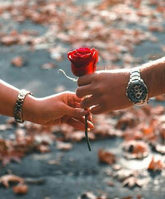 احلى صور إهداء الزهور او الورود الحمراء