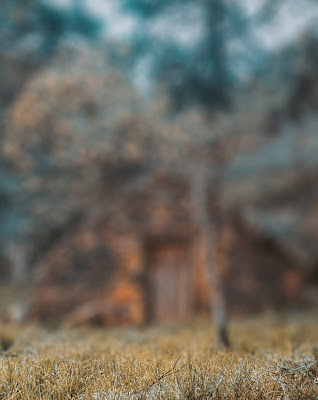New HD Nature Blur Background Free Stock