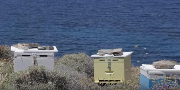 Η Μελισσοκομία στην Πάρο VIDEO ντοκυμαντέρ