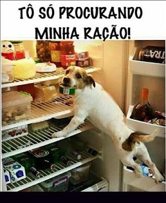 memes, melhores memes da net, melhor site de memes, site de memes, memes brasil, humor, engraçado, memes engraçados, cachorros, memes de cachorros, dogs