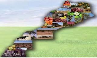 تنظيم الفلاحة المغربية