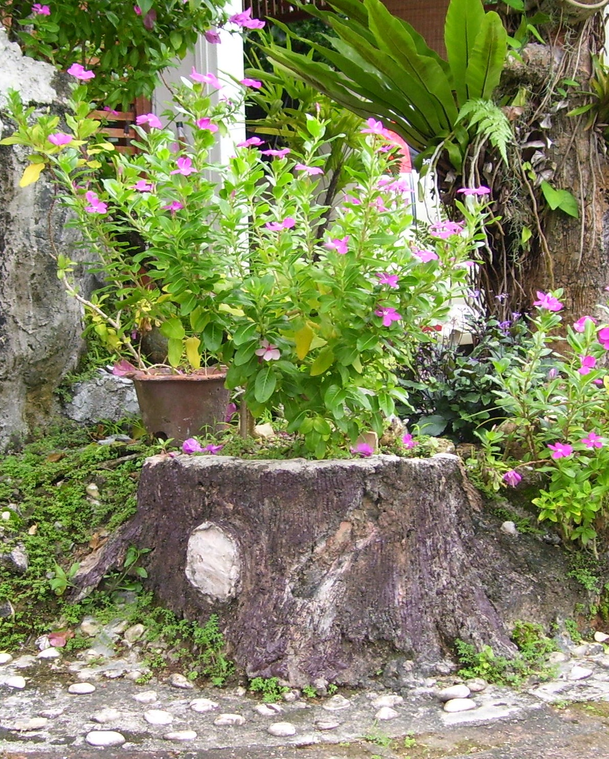 A Fake Stump Used As Planter For Periwinkles