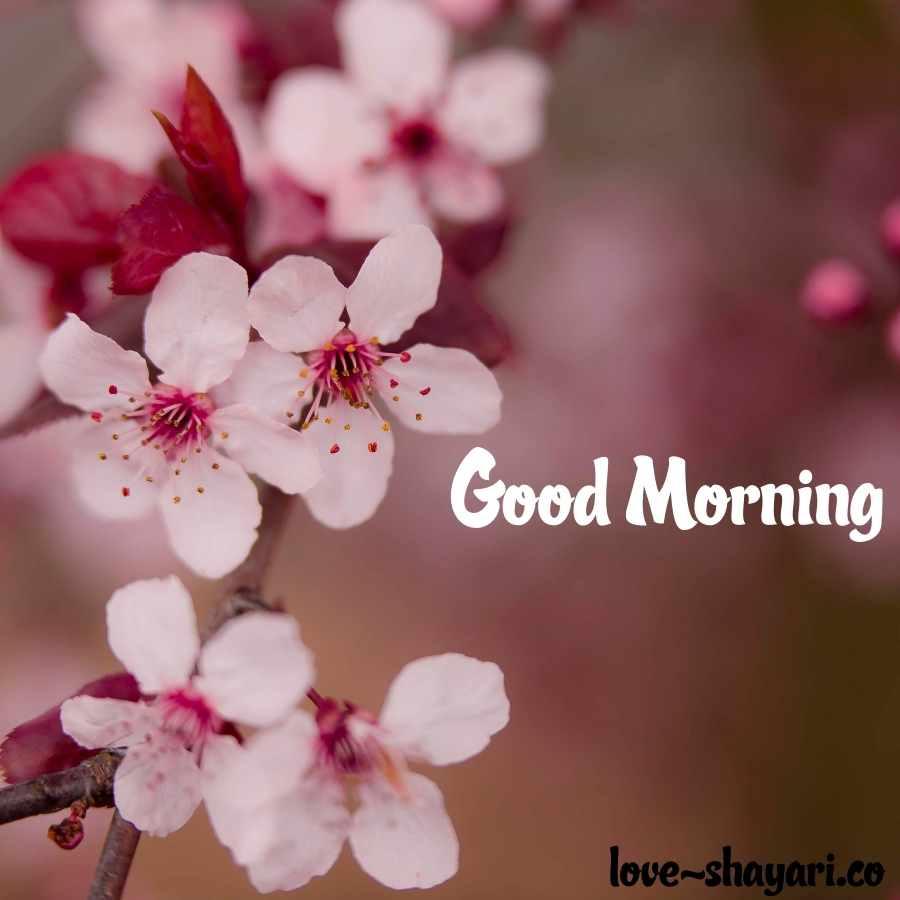 good morning flower hd images