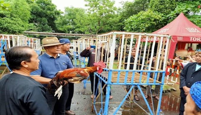 Kontes Ayam Pelung Turut Memeriahkan HUT Kabupaten Tangerang Ke-76 Tahun
