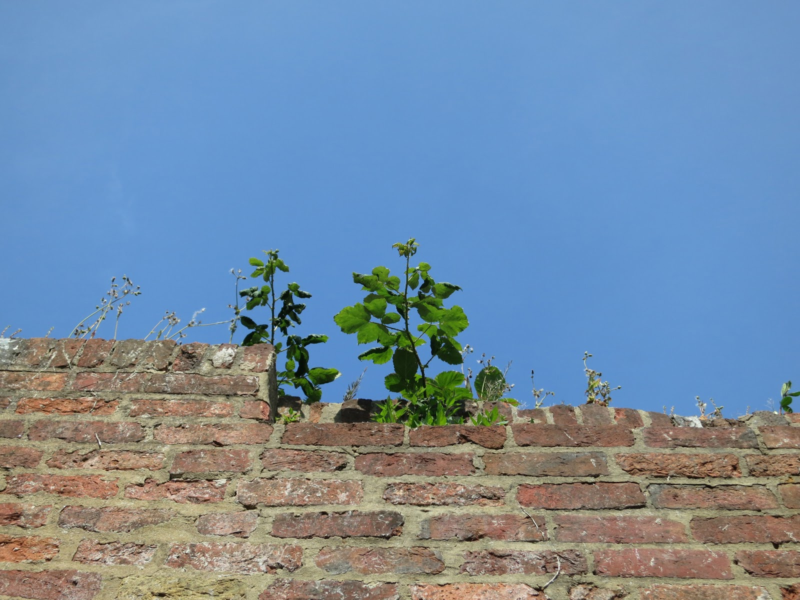Plants growing on top of wall against blue sky
