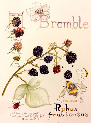 Botanical Art Journal : Bees and Blackberries in Watercolour and Ink.Art workshops in London. Kent.
