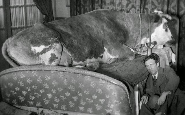 «Золотой век», режиссер Луис Бунюэль