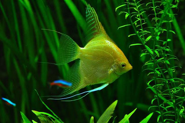 Aquascape oleh MabelAmber Pixabay