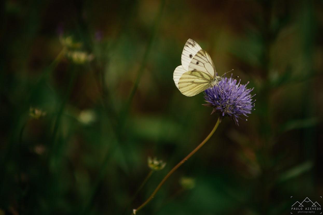 Flor e borboleta