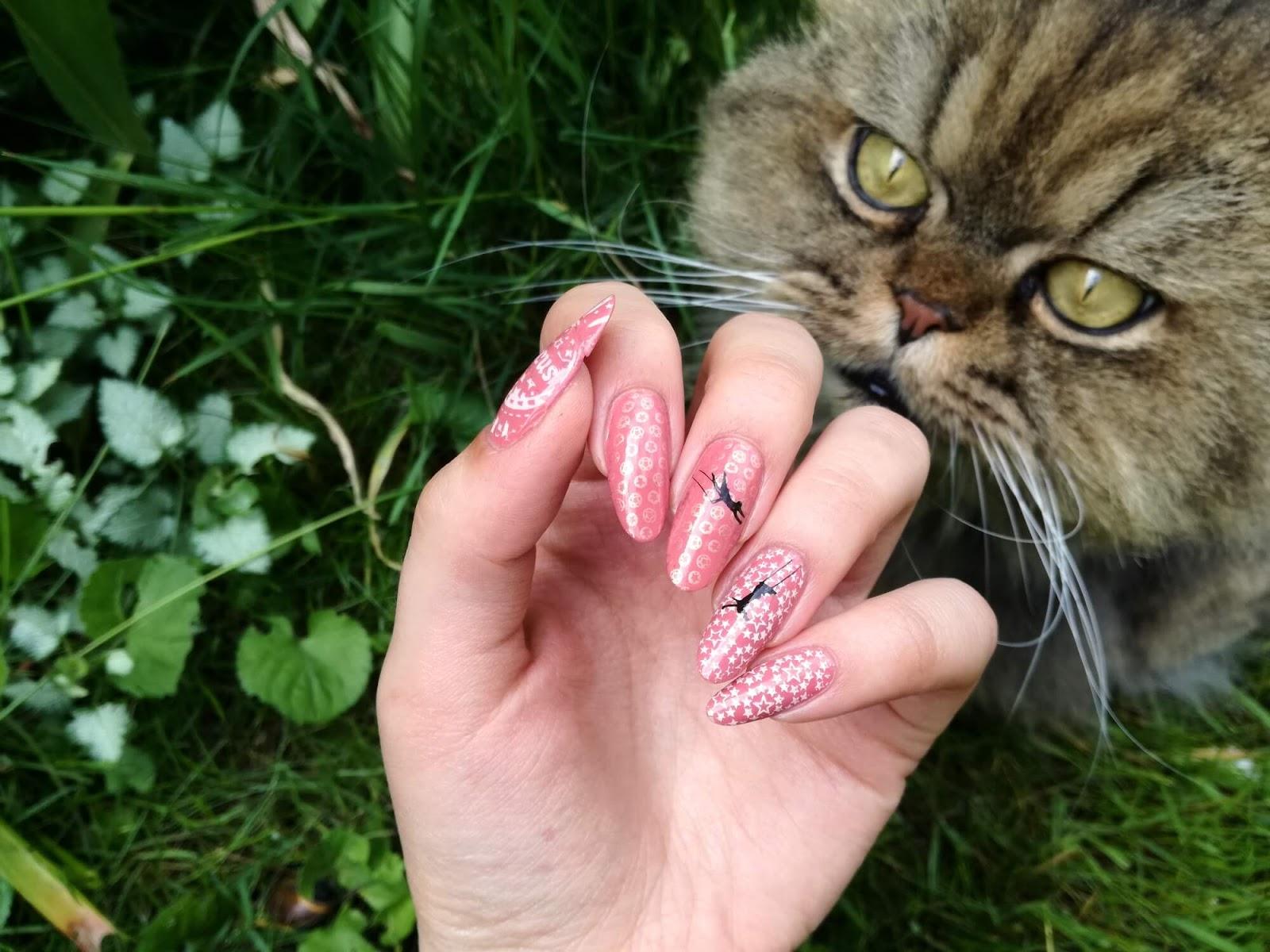 paznokcie i kot pers