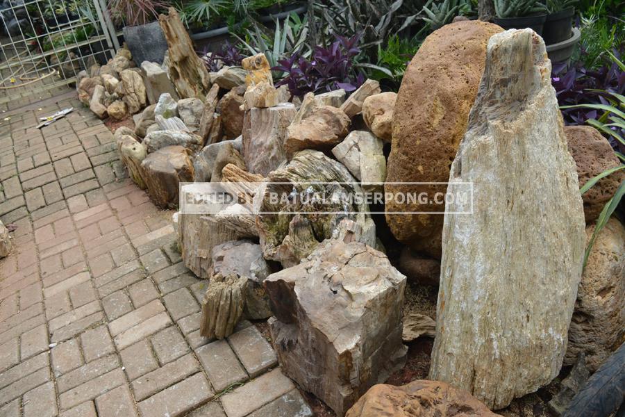 jual batu fosil
