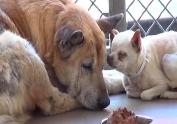 Proprietor  Gives Up 2 Elderly Dogs At High Kill Shelter. Just When They've Given Up They Find A Home Together