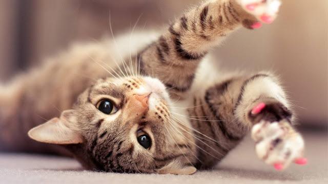 Dibalik Fakta Kucing Sebagai Binatang Kesayangan Nabi Muhammad SAW