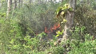 Puntung Rokok Jadi Penyebab Kebakaran Hutan di Ngusikan Jombang