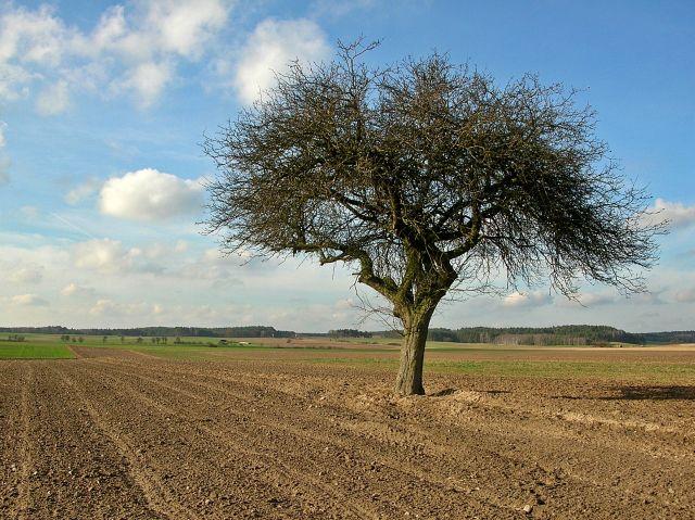 pole, drzewa