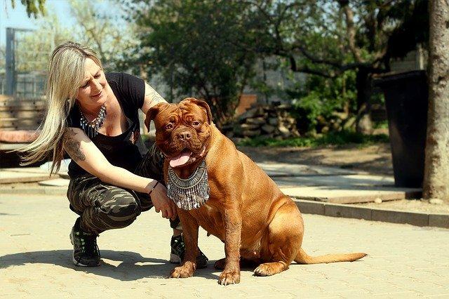 كلب فرنش ماستيف